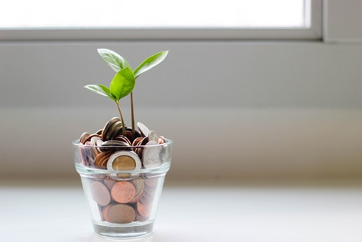 How to Make Money Grow on Trees